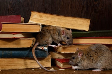 Mouse Rodent Pest Control Services